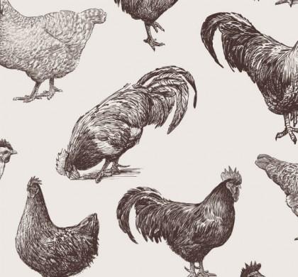 """Il pollo romagnolo a """"Linea Verde"""""""