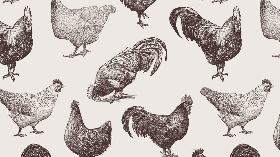 Il pollo romagnolo in fricassea